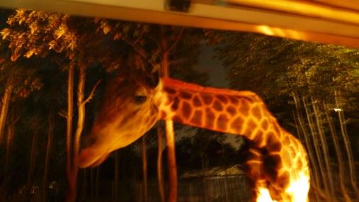 ...und Giraffen strecken ihre Hälse in die Waggons.